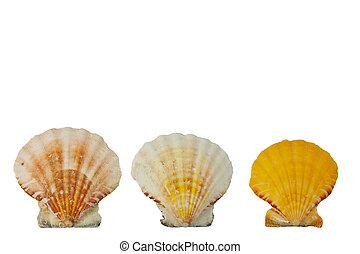 Three shells in a row