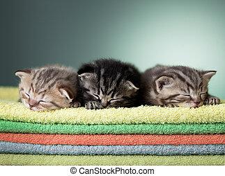 Three sleeping scottish baby kitten on stack of colorful ...