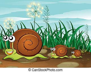 Three snails - Illustration of the three snails