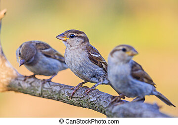 three sparrows sit on a beautiful branch