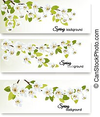 Three spring nature banners with blossom of cherry. Vector.