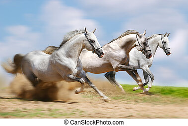 three stallion running fast