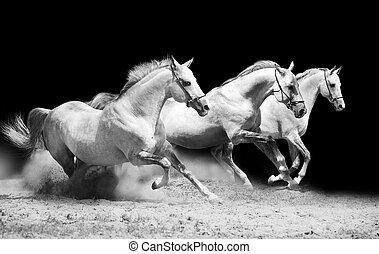 three stallions on black galloping in dust