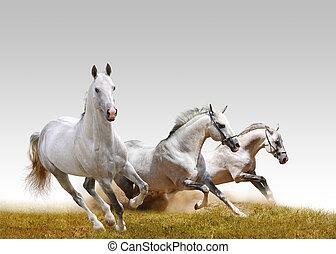 three stallions