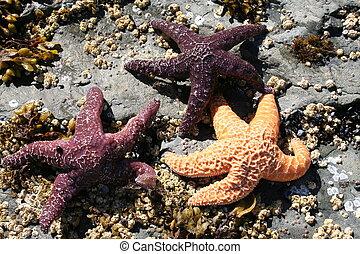 Three Starfish