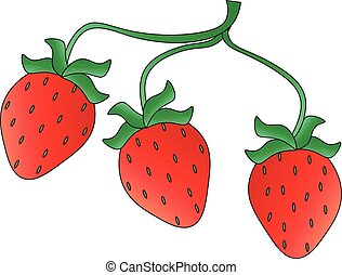 Three strawberries on a branch, vector illustration