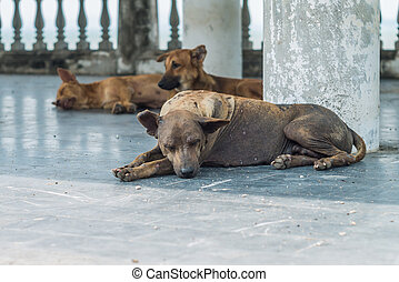 Three stray dog resting and sleeping at pavilion