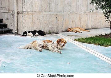 Three Stray Dogs on Pavement in Albania