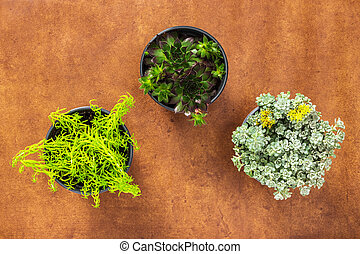 Three succulent plants on leather background