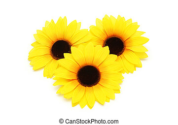Three sunflowers isolated on the white background