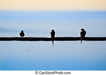 three swallows sitting on a power line with the sea and the...