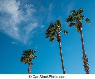 Three tall palm trees against blue sky