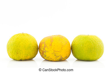 Three thai mandarin orange on white background