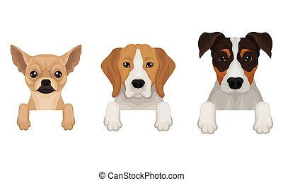 Three thoroughbred dogs peep out. Vector illustration on a white background.
