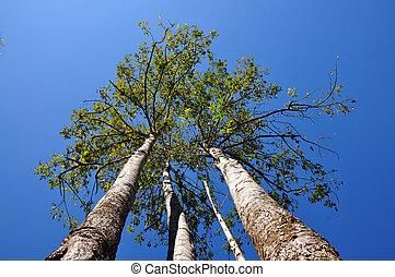 Three tree against the blue sky