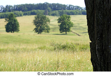 three trees in a field with plenty of green grass