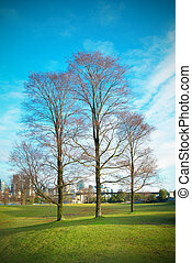 Three trees in autumn park