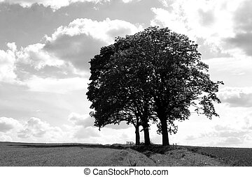 three trees in black and white