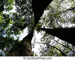 three trees in forest