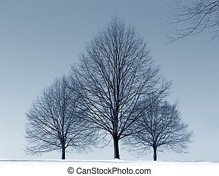 three trees against blue sky - winter