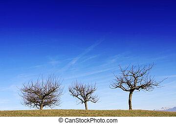 Three tress against blue sky