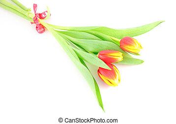 Three tulip flowers isolated on white background