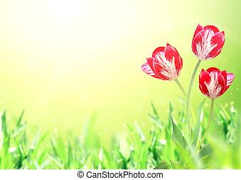 Three tulips on sunny spring background