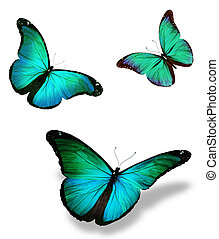 "Three turquoise butterfly ""morpho"", isolated on white..."