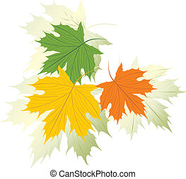 Three varicolored maple leaves. Vector illustration