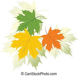 Three varicolored maple leaves. Vector illustration