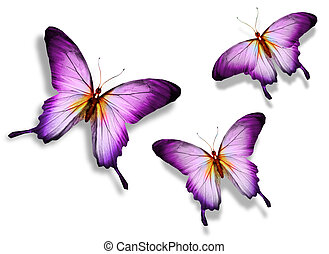 Three violet butterfly