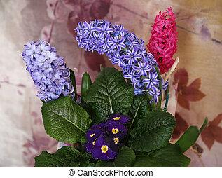 Three violet hyacinths and violet primrose