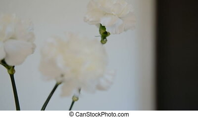 Three white cut flowers with large buds stand in a vase.