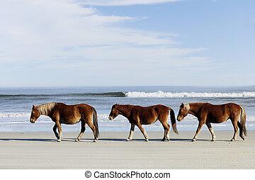 Three Wild Mustangs on a Beach - Three wild horses walking ...