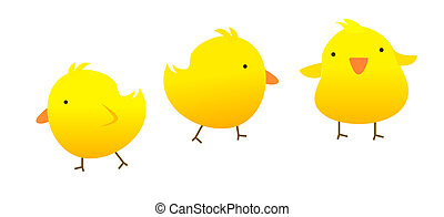 three yellow chickens on a white background
