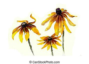 three yellow rudbeckia garden flowers watercolor painting