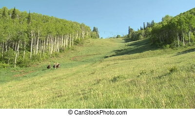three young women on horses gallop across green meadow- slow...