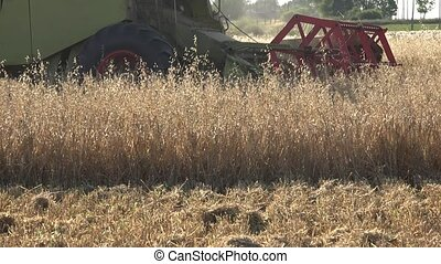 thresher machine with reel and cutter bar is cutting oats on farm field. Panorama. 4K