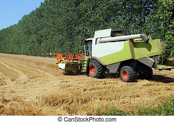thresher machine works in a wheat field