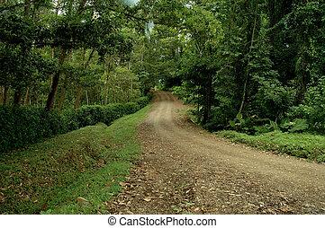 thru, bosque, camino, suciedad