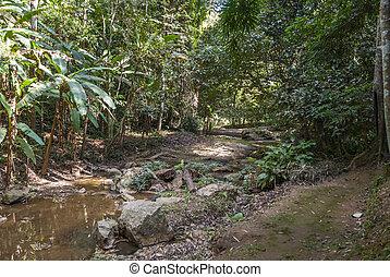 thru, caminho, direção, selva, cachoeira