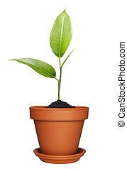 thuis, plant, flowerpot.