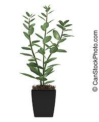 thuis, plant pot