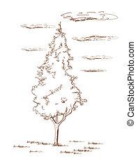Thuja.  - Thuja  - hand drawn, vector illustration.