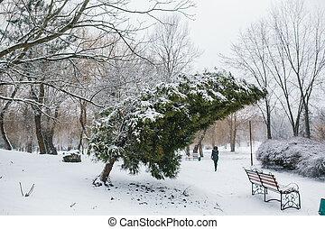 thuja, parque, nevado