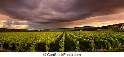 Thunderstorm clouds over the vineyard