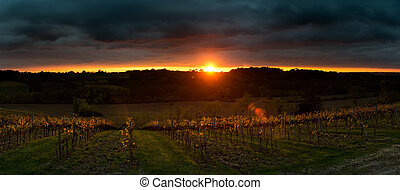 Thunderstorm with sunset in grape field.