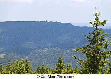 thuringian, floresta