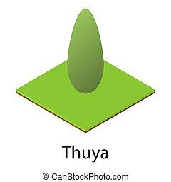 Thuya icon, isometric style