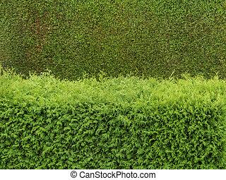 haie vert barri re intimit barri re symbolizing image de stock recherchez photos et. Black Bedroom Furniture Sets. Home Design Ideas
